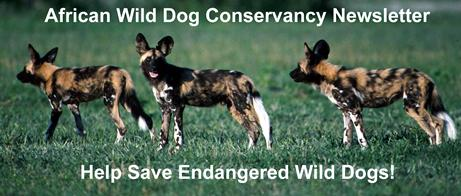 wild dog yearlings
